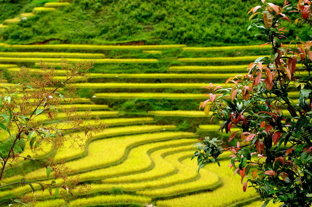 Photograph Colour of the terraces by Frank Dang on 500px
