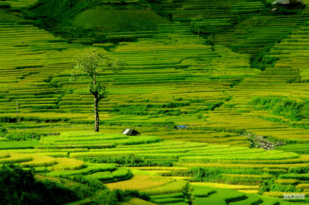 Photograph The terraces by Frank Dang on 500px