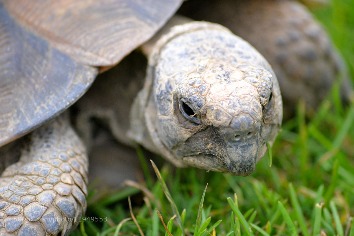 Photograph Tortoise by Emily N on 500px