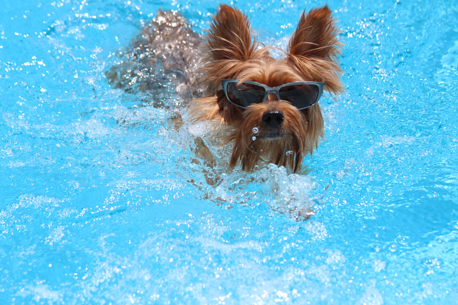 Swimming with my shades on! by Cheley Blucher on 500px.com
