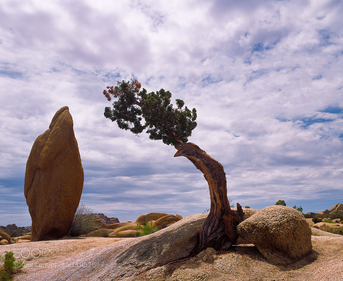Photograph Juniper and Monolith by Doug Dolde on 500px