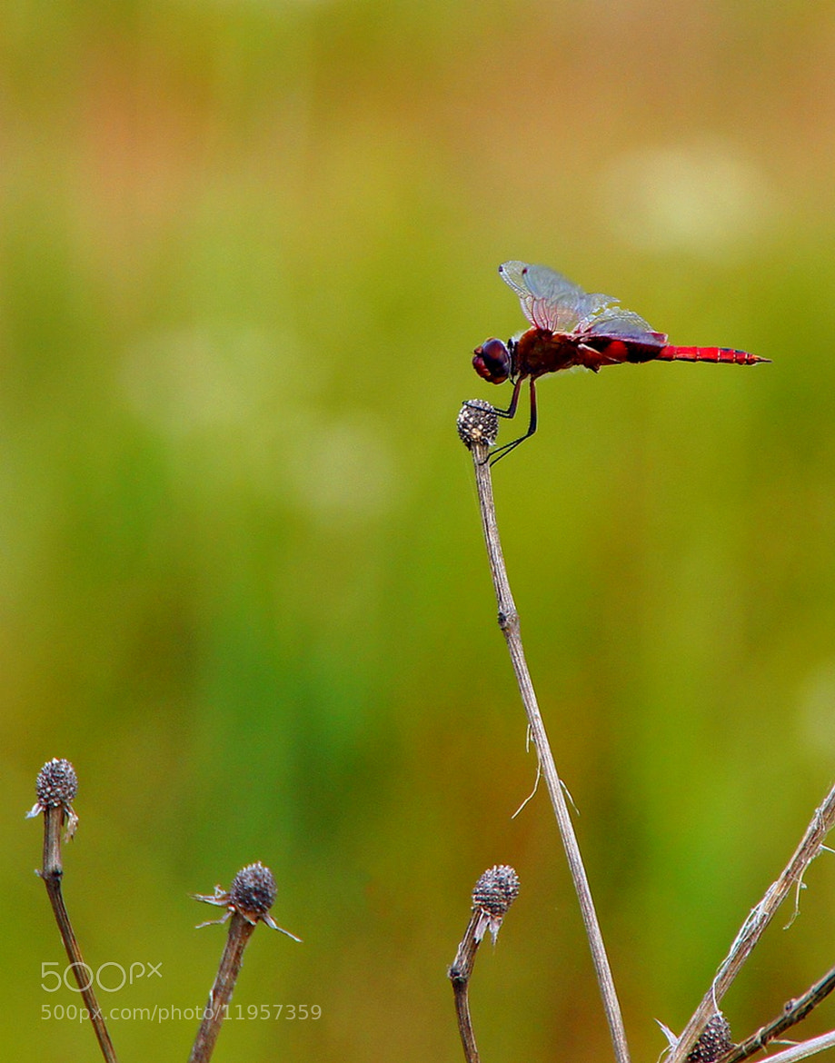 Photograph Red Saddlebags on Canvas by Misty Dawn Seidel on 500px