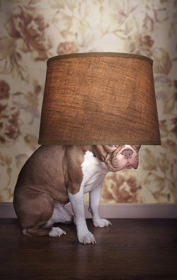 Sherlock as a Lamp by Samantha Lynn on 500px.com
