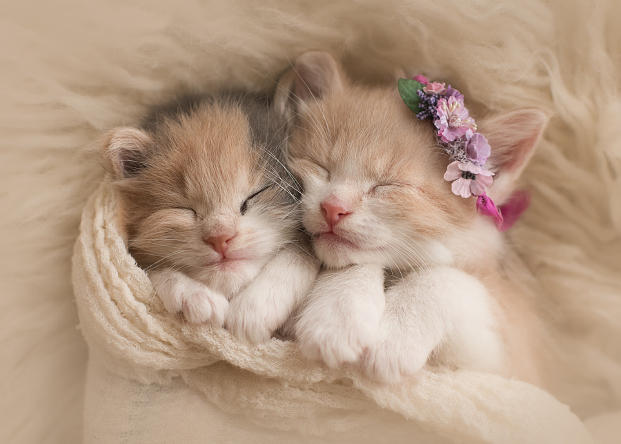 Snuggling Kittens by Jessica Pugliese on 500px.com