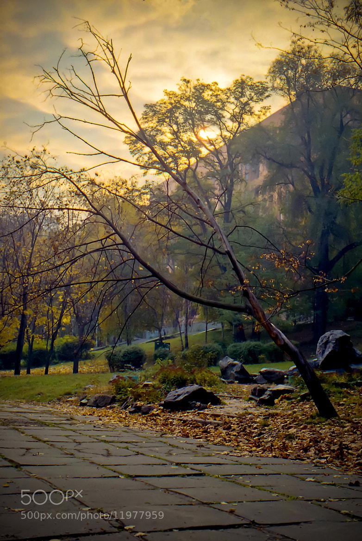 Photograph Осень в парке by Andrey Zaika on 500px