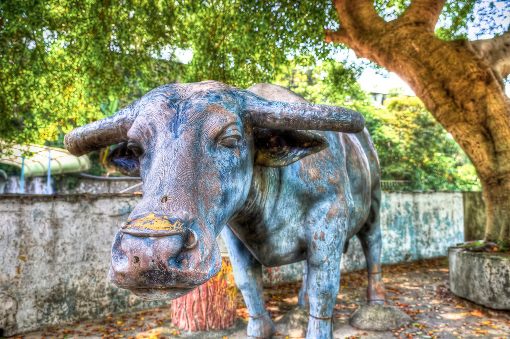Photograph A Buffalo Statue by Bing-Chen Hung on 500px