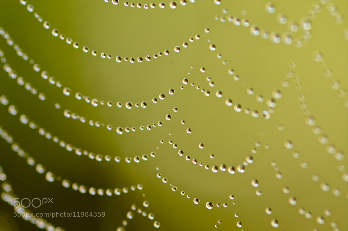 Photograph Transient Pearls by Hemant Mistry on 500px