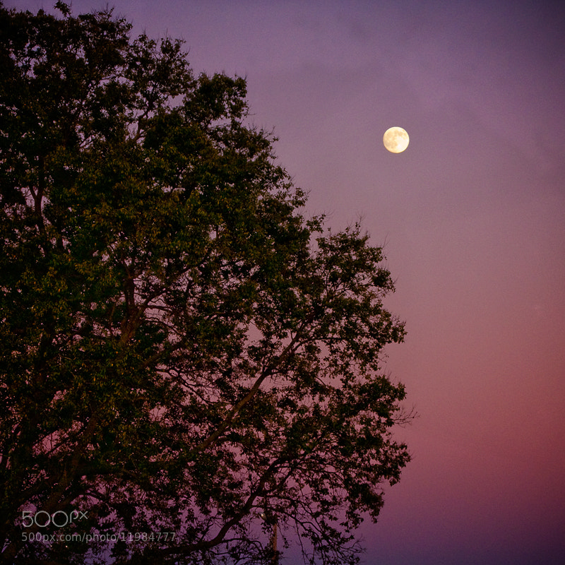 Photograph Moon by Dan Newsom on 500px