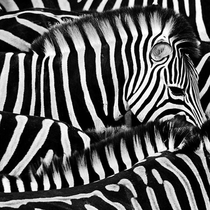 Black & white  by Ibrahim Ahmed on 500px.com