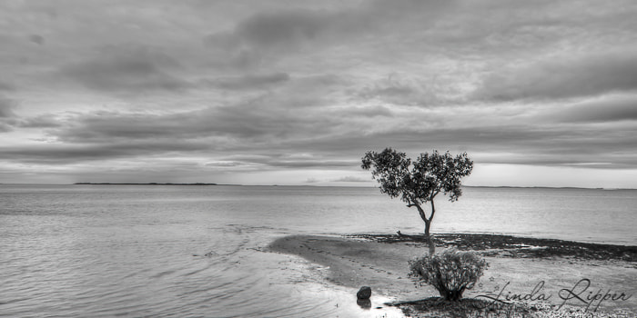 Photograph Bayside - 1 by Linda Ripper on 500px