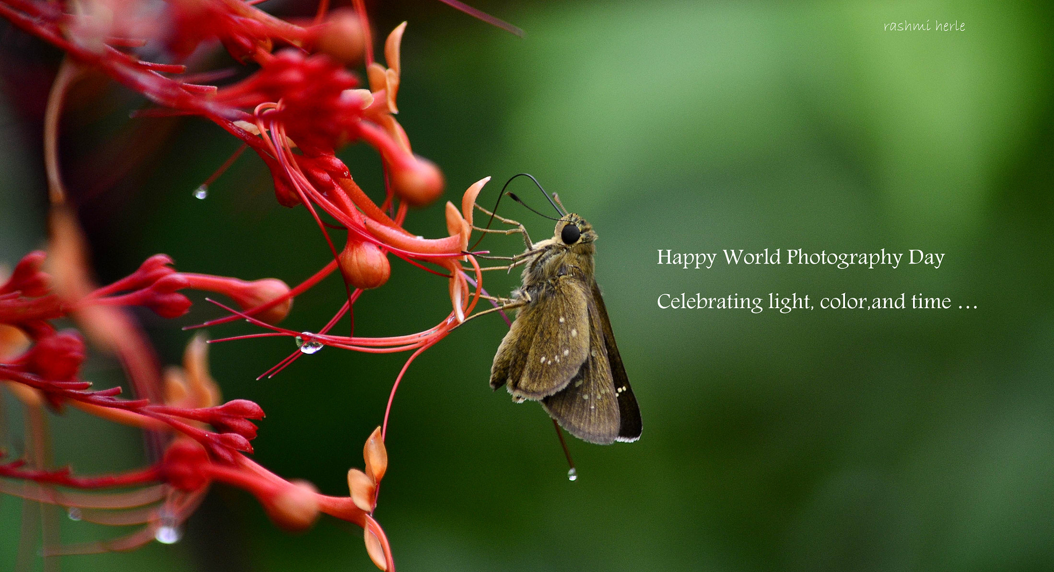 Photograph  Happy World Photography Day by Rashmi Herle on 500px