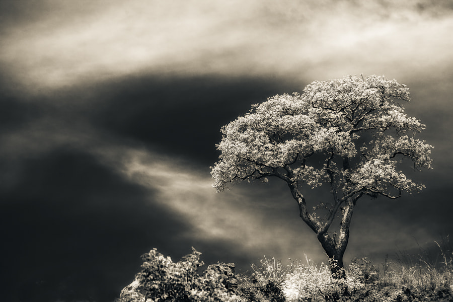 Photograph Mystery Tree by Mario Moreno on 500px
