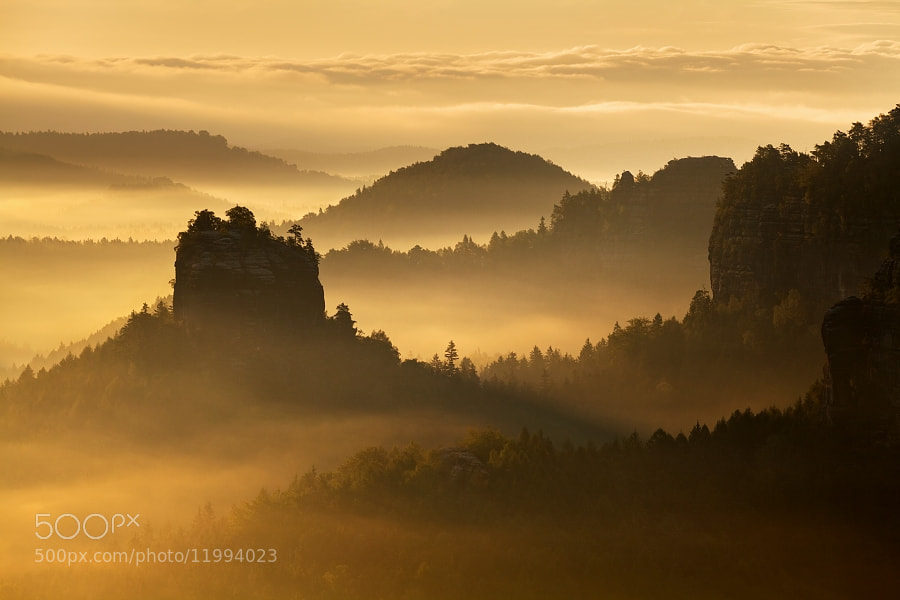 Photograph Golden morning  by Daniel Řeřicha on 500px