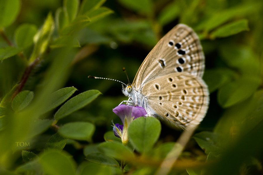 Photograph butterfly by Tom  Abraham Dcruz on 500px