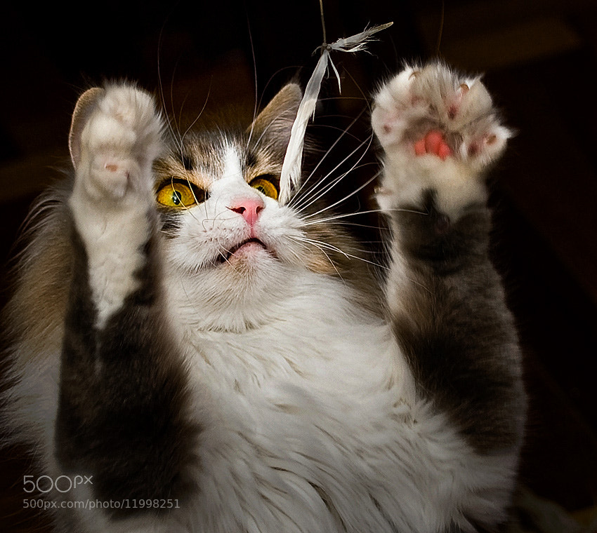 Photograph catch by Tikhon Tikhonov on 500px