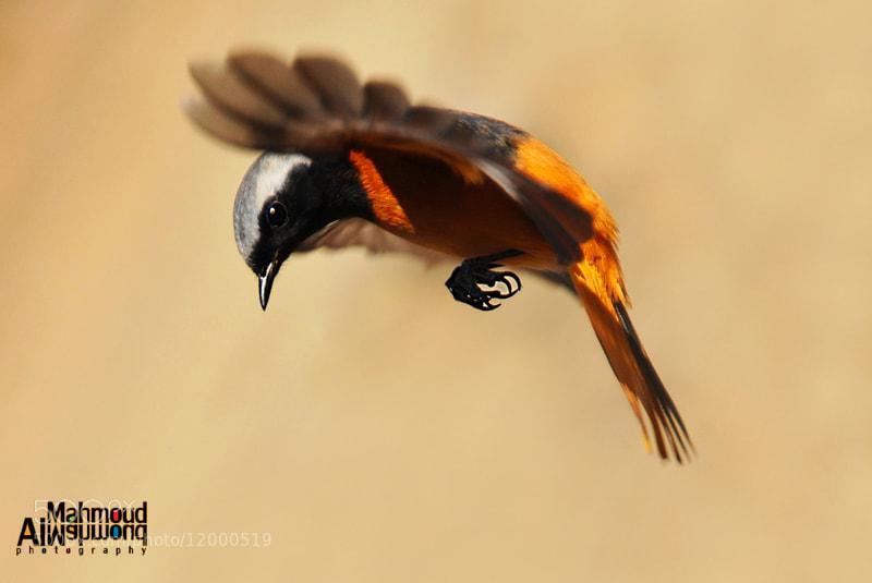 Photograph wings 0002 by Mahmoud Al-Mahmoud on 500px