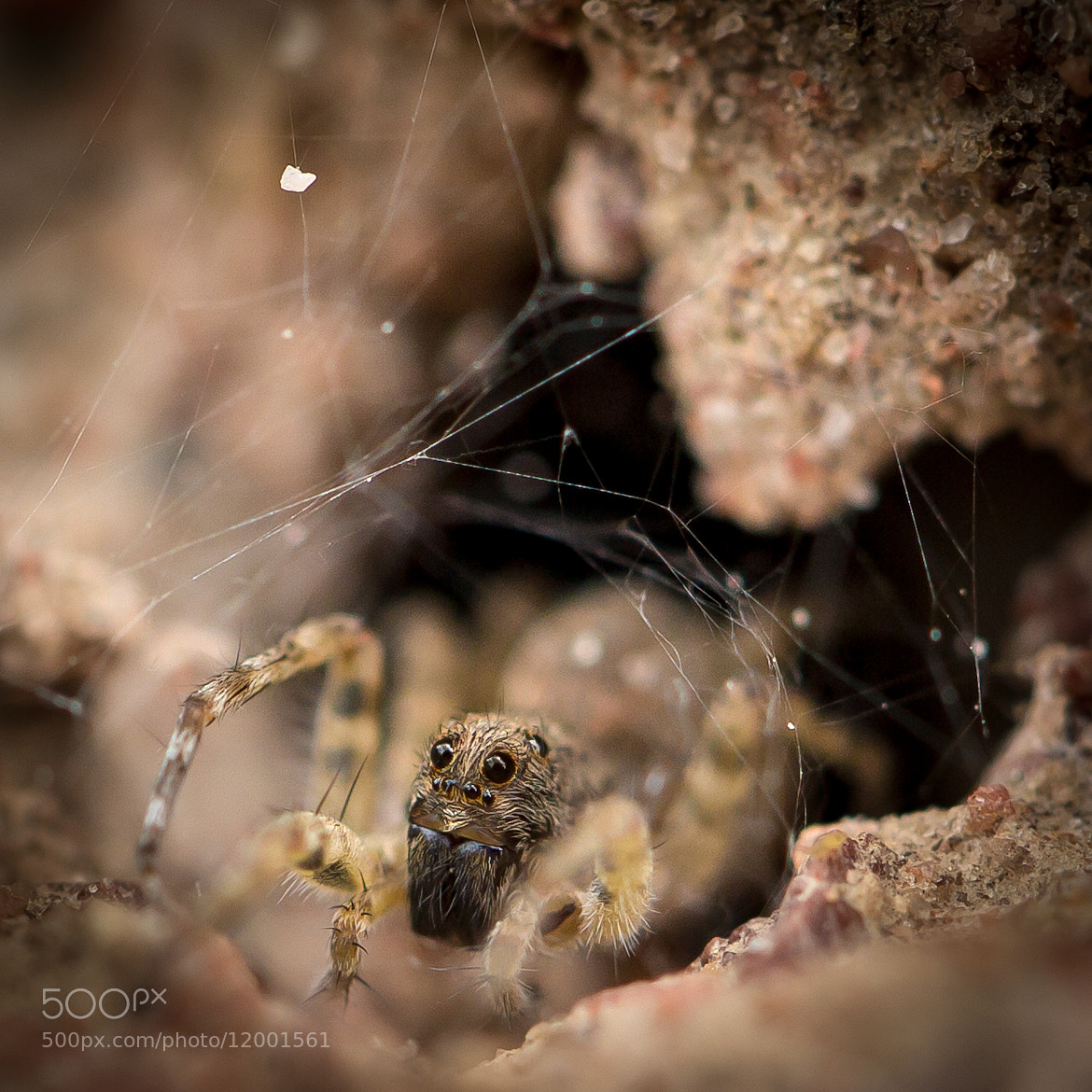 Photograph spider by Te Montri on 500px