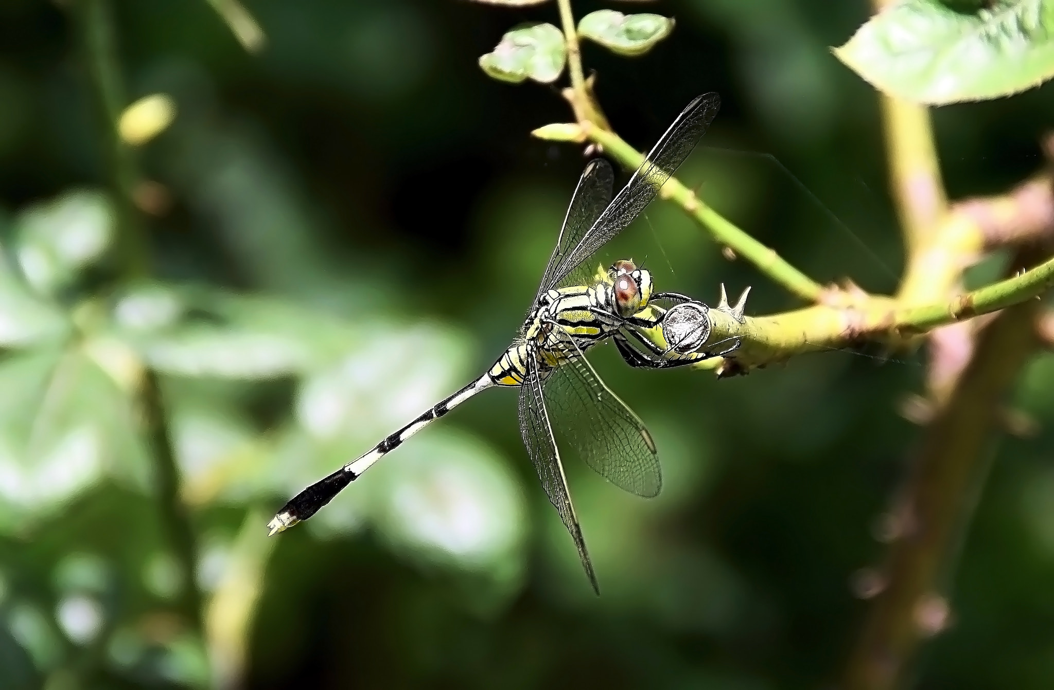 Photograph Dragonfly... by Anshul Tiwari on 500px