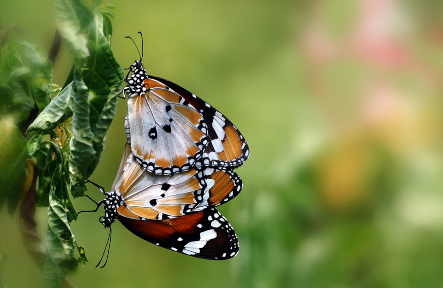 Photograph Mating - 2 by Khoo Boo Chuan on 500px