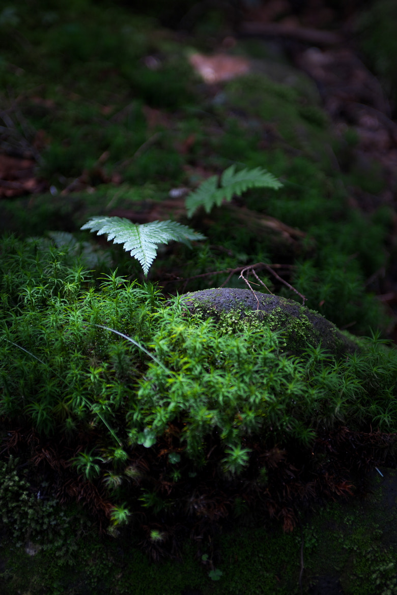 Photograph Forest of the moss by Duke Uehara on 500px