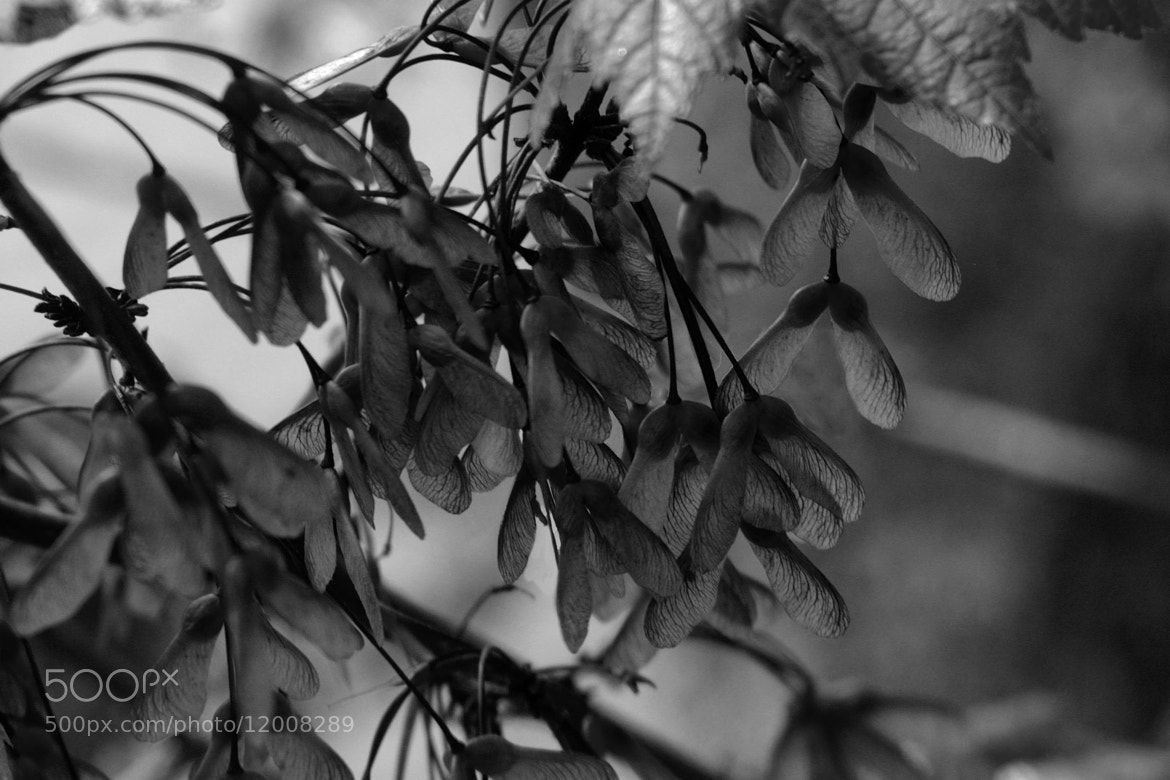 Photograph Leafpod shady by Terry Letton on 500px