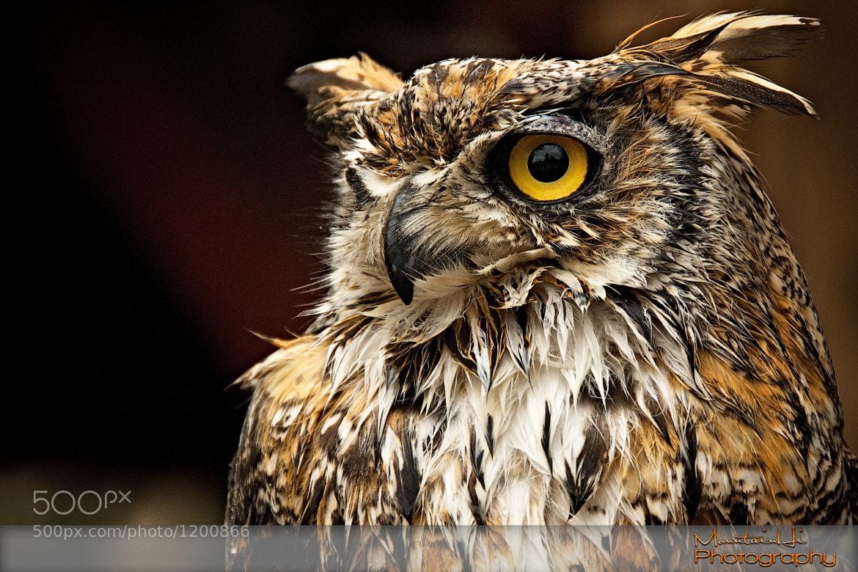 Photograph Sharp Eye by Carl Johnson on 500px
