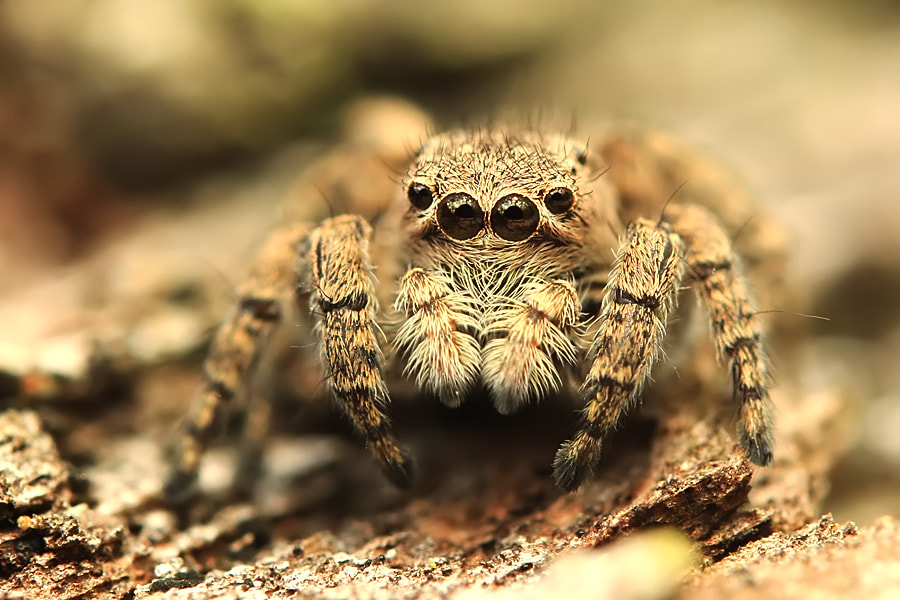 Photograph Si Jumper by Sabriamin M on 500px
