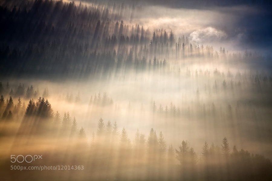 Photograph Concert of spruces by Marcin Sobas on 500px