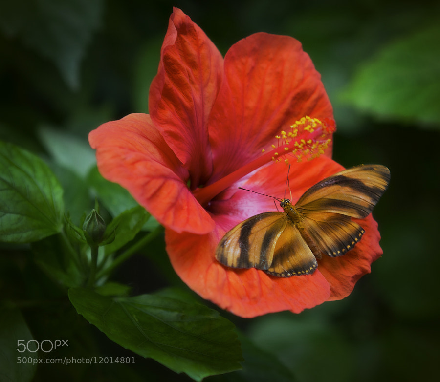 Photograph Exotic by Alida Jorissen on 500px