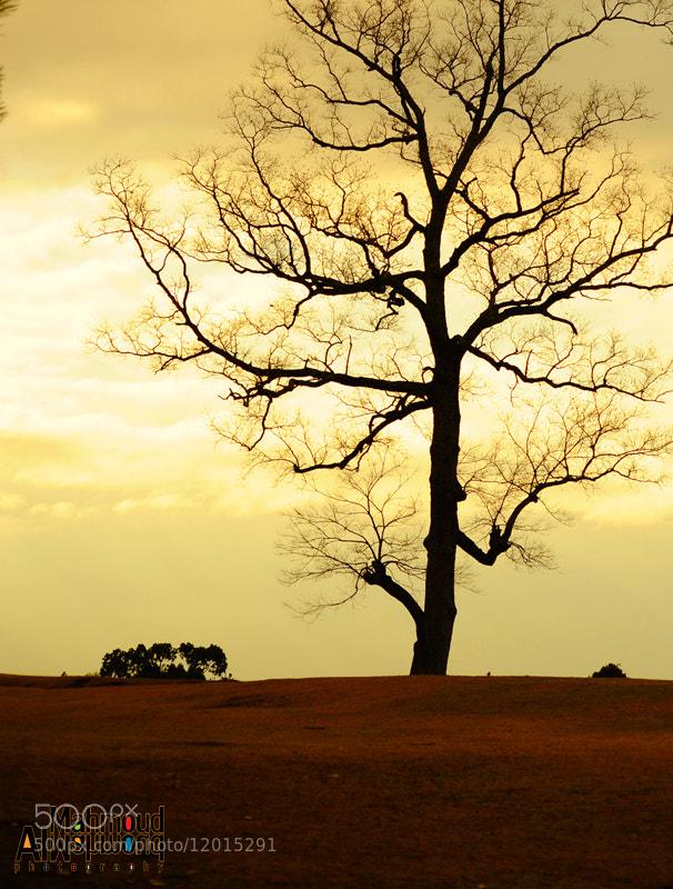 Photograph Tree in the Mist 0040 by Mahmoud Al-Mahmoud on 500px