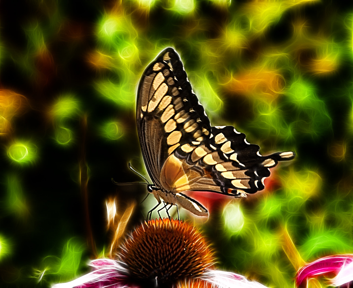 Photograph Papilio Butterfly! by Patty Barker on 500px