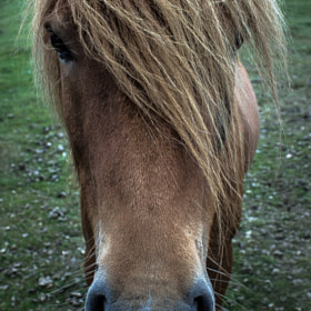 Wild horse by Óli Magg (Olimagg)) on 500px.com