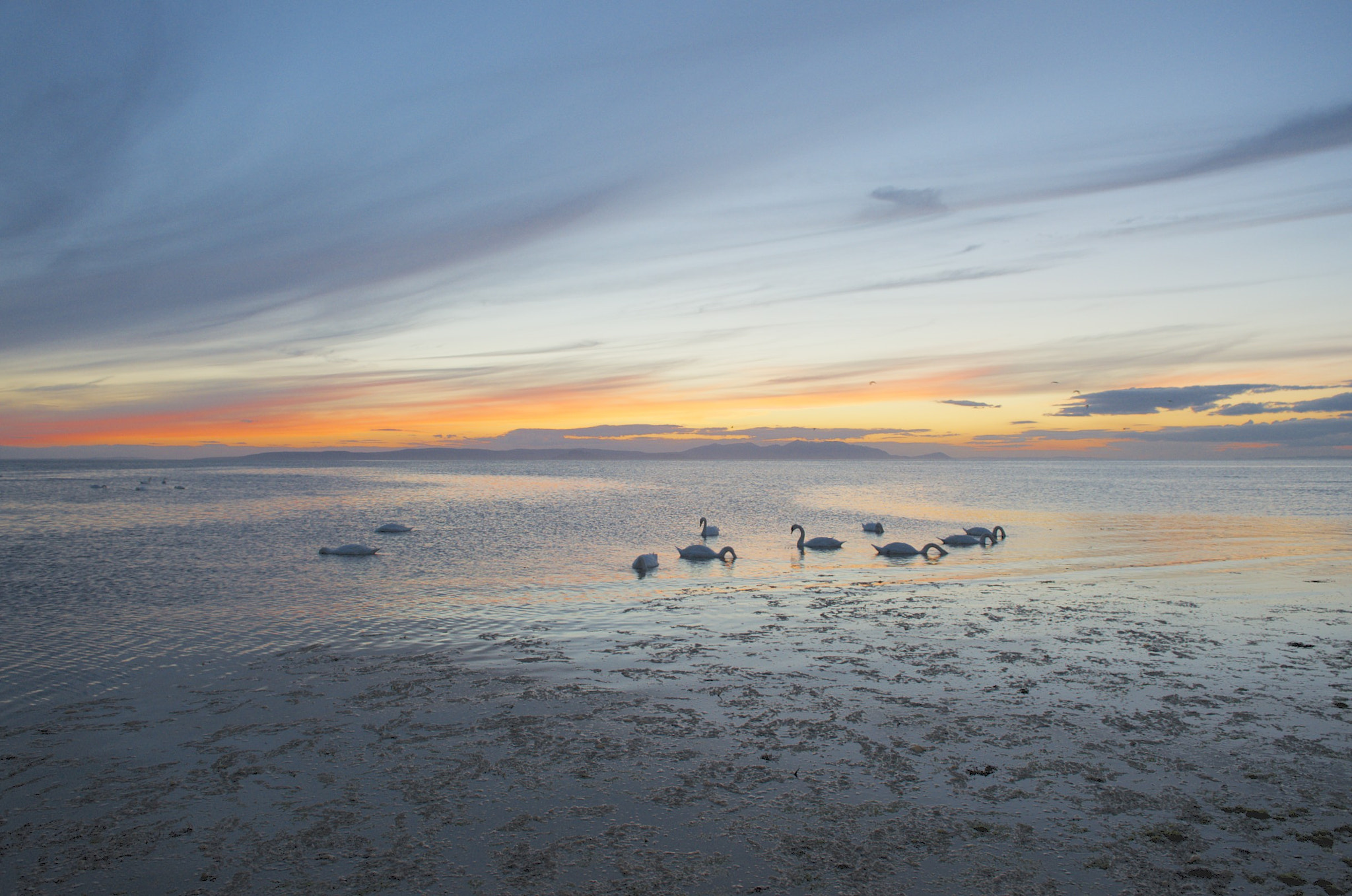 Photograph Swans at  sunset at Ayr Beach by Craig MacLeod on 500px