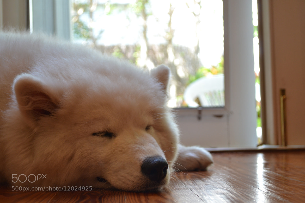 Photograph Tired Out by Alex  on 500px