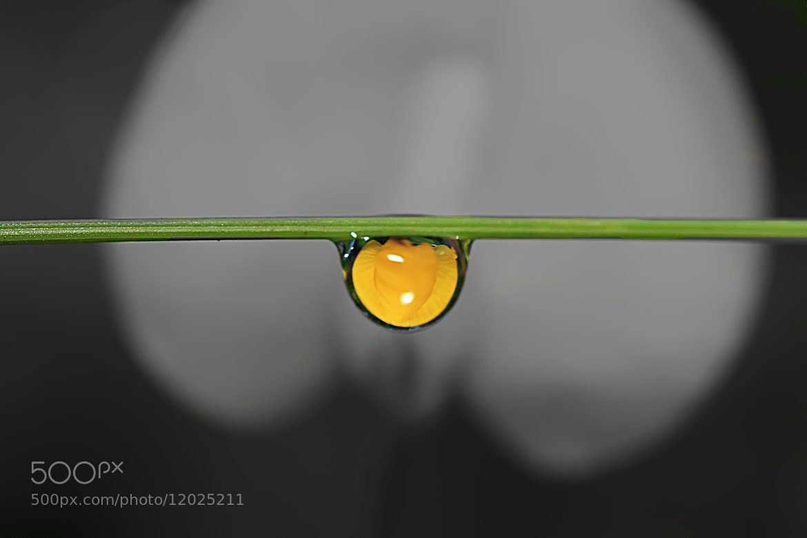 Photograph Flower in drop by Siriwat Wongchana on 500px