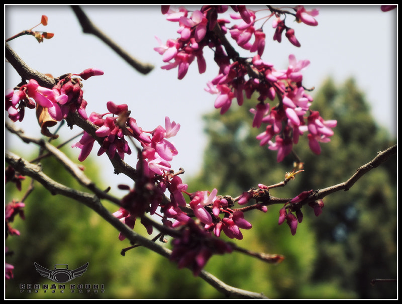 Photograph Spring bloom. by Behnam Rouhi on 500px