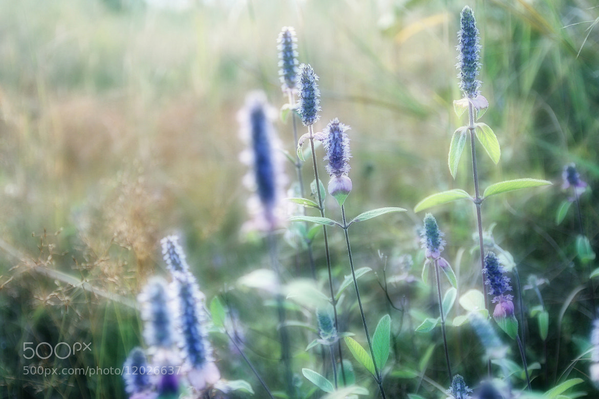 Photograph soft focus by Siriwat Wongchana on 500px