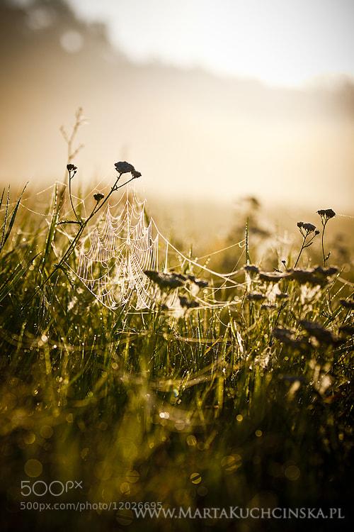 Photograph morning mist by Marta Kuchcinska on 500px