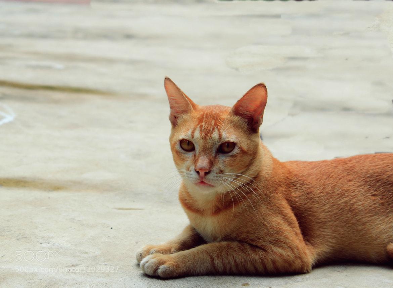 Photograph Cat. by Amitrajit Niyogi on 500px