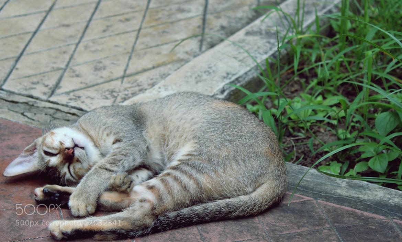 Photograph Cat II by Amitrajit Niyogi on 500px