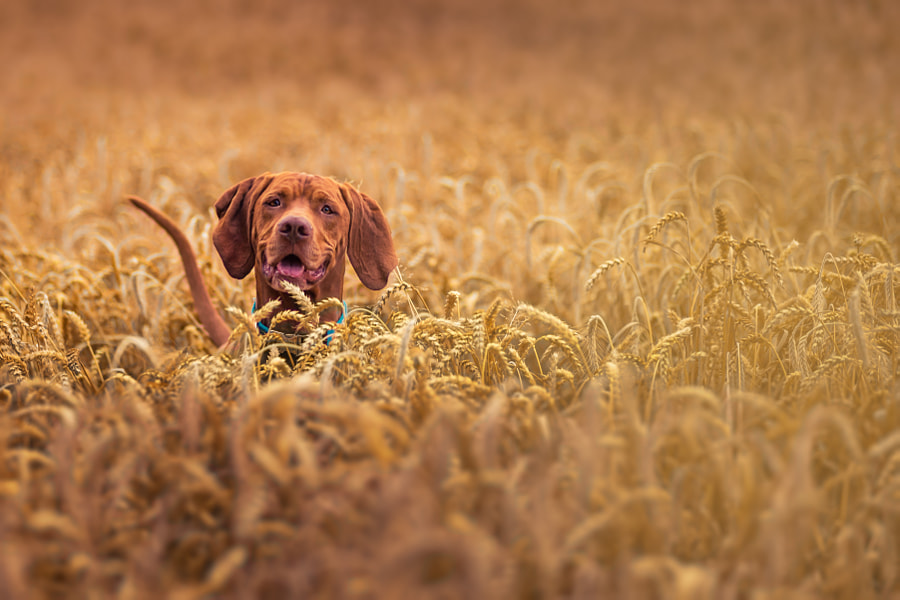 Photograph Great Summer by Christoph Eberl on 500px