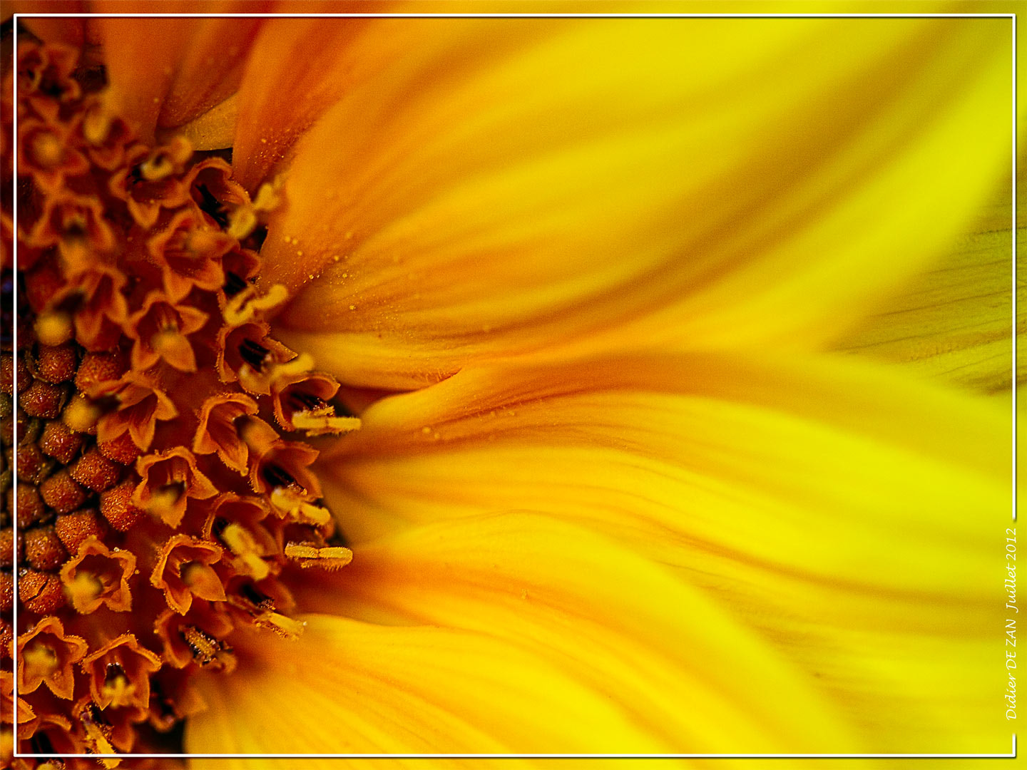 Photograph SunFlower .... by Didier  DE ZAN on 500px