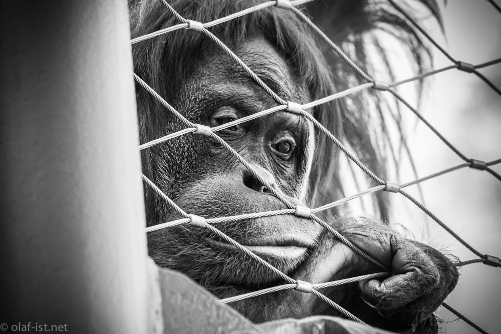 Photograph Hinter Gittern by Olaf H. on 500px