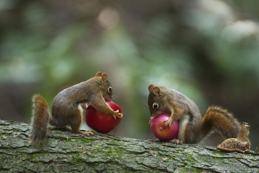 Photograph Mine is larger by Andre Villeneuve on 500px