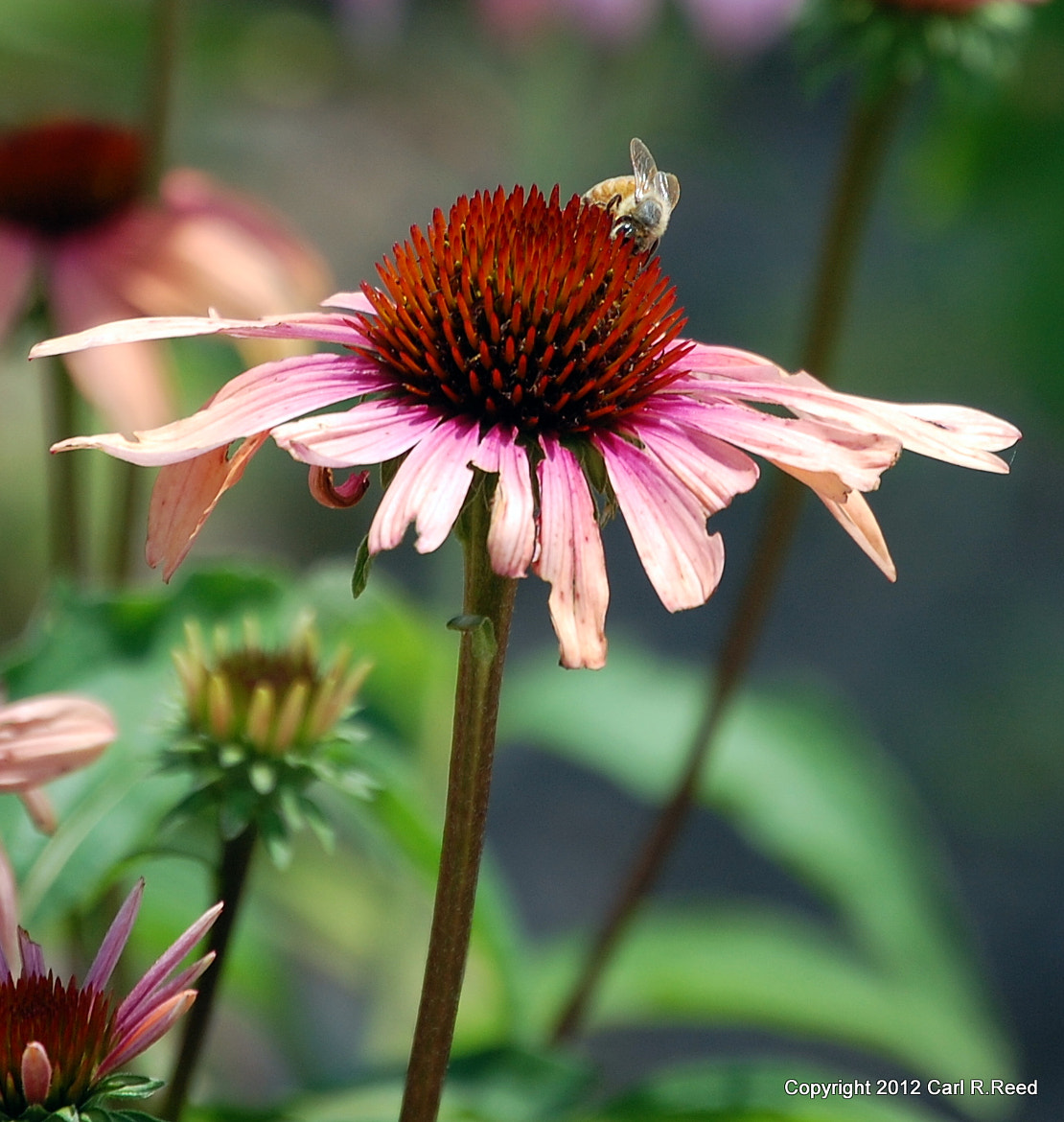 Photograph flower & bee 828 by Carl Reed on 500px