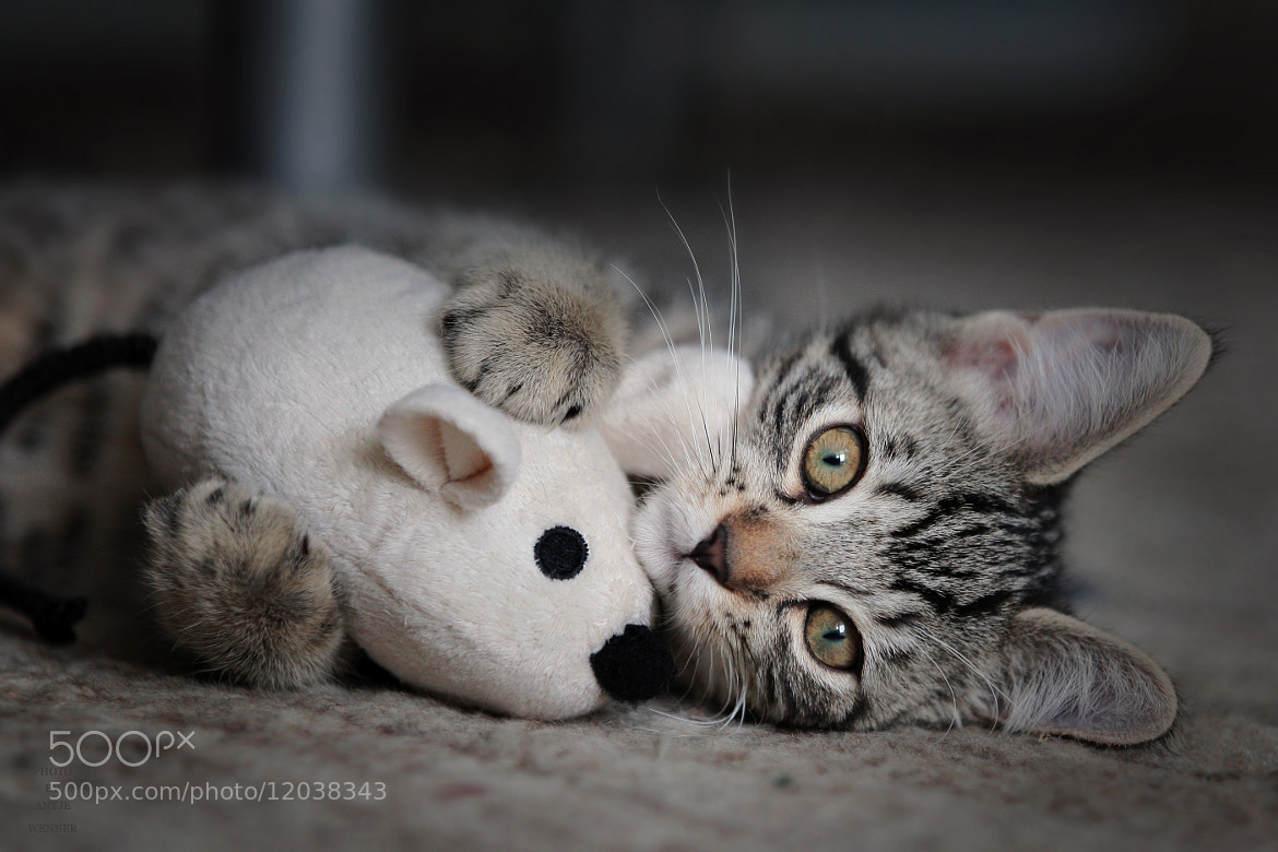 Photograph SOMEONE TO HOLD ONTO by Antje Wenner on 500px