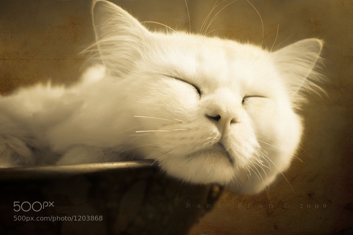 Photograph Rich cat by Rami Khan on 500px