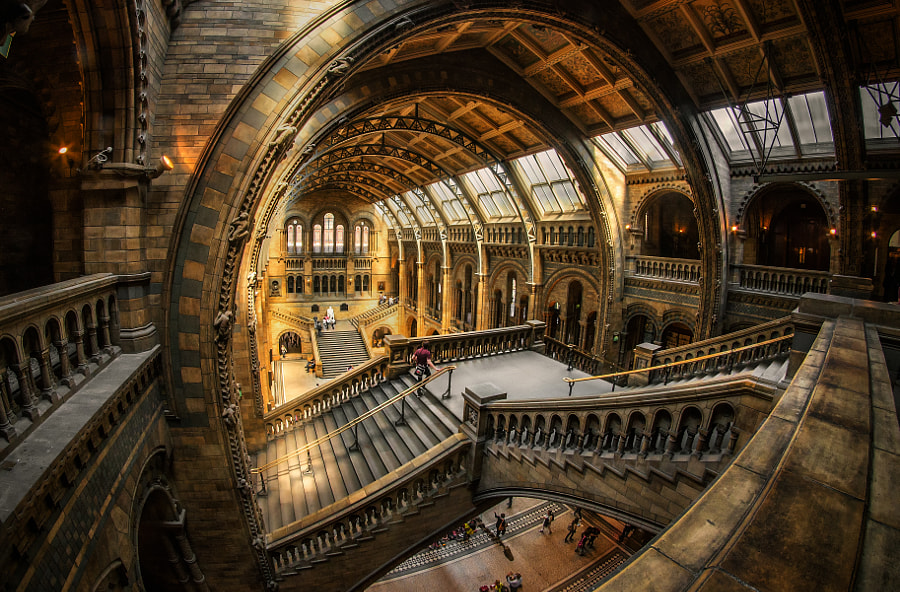 Natural History Museum by Nick_Moulds on 500px.com