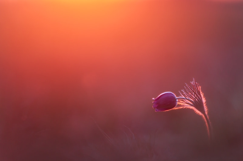 Photograph Waking up by Marco Schöfl on 500px