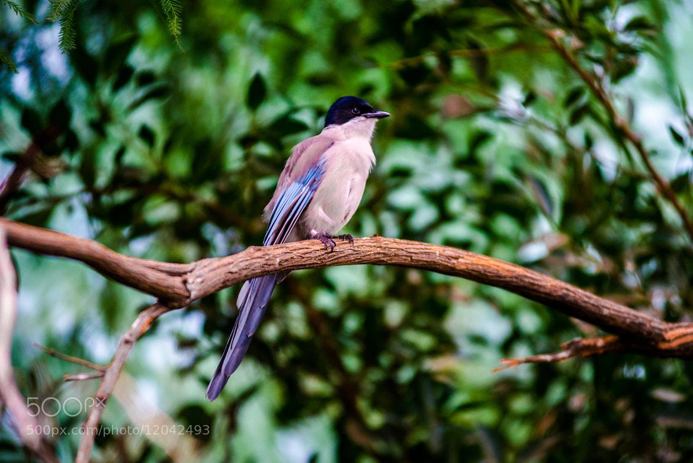 Photograph Bird by Mike Kolesnikov on 500px